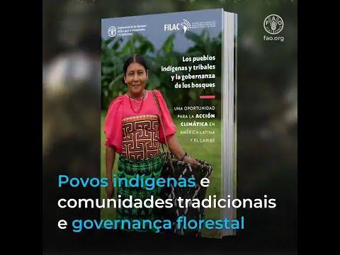 Povos indígenas são os melhores guardiões das florestas na América Latina e Caribe