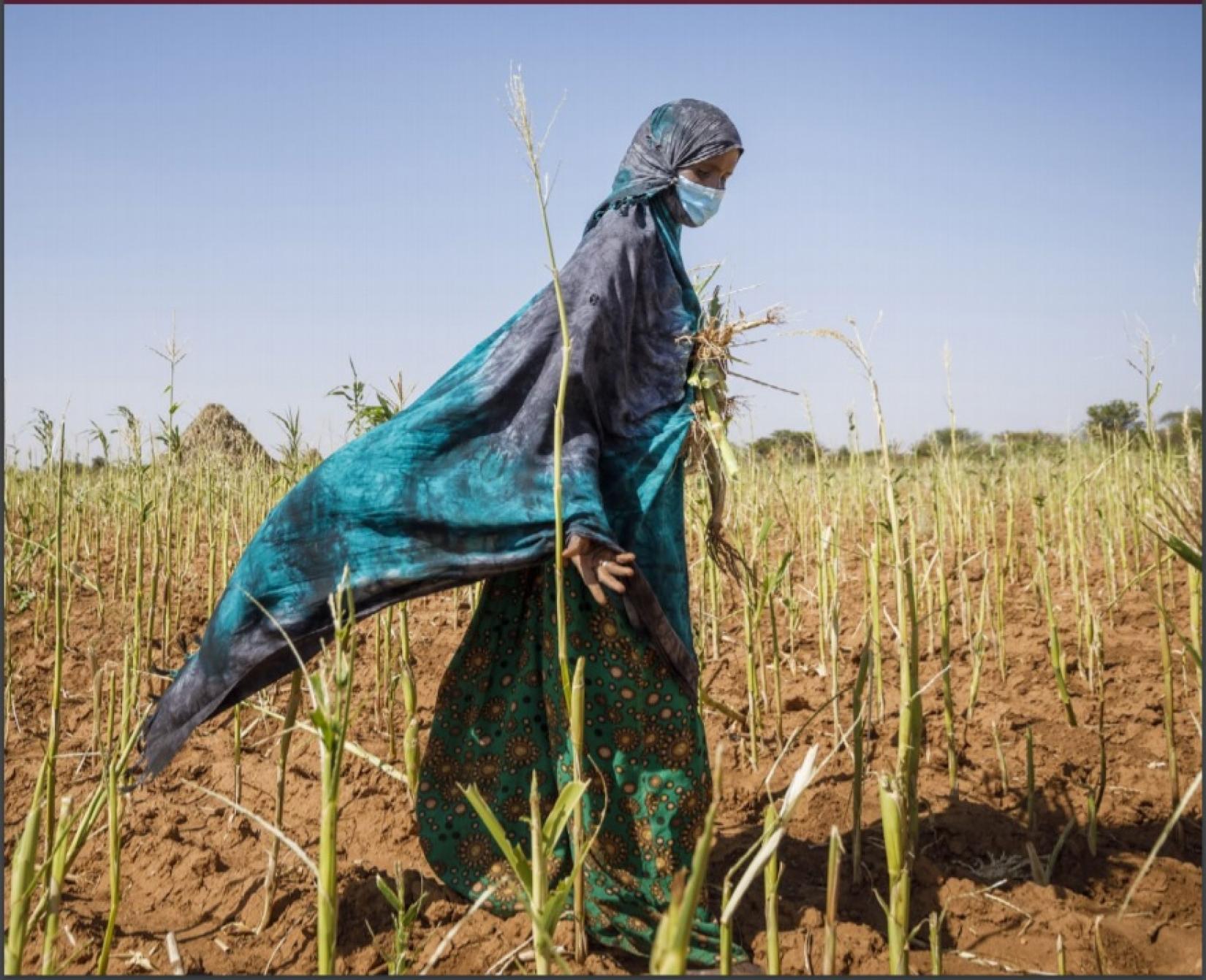 Novo relatório da FAO constata que as perdas agrícolas causadas por desastres naturais continuam a aumentar, infligindo danos econômicos e prejudicando a nutrição.