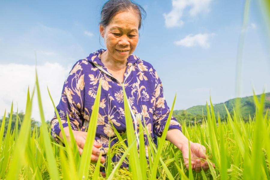 Relatório aponta necessidade de fortalecer a biodiversidade que sustenta sistemas alimentares sustentáveis
