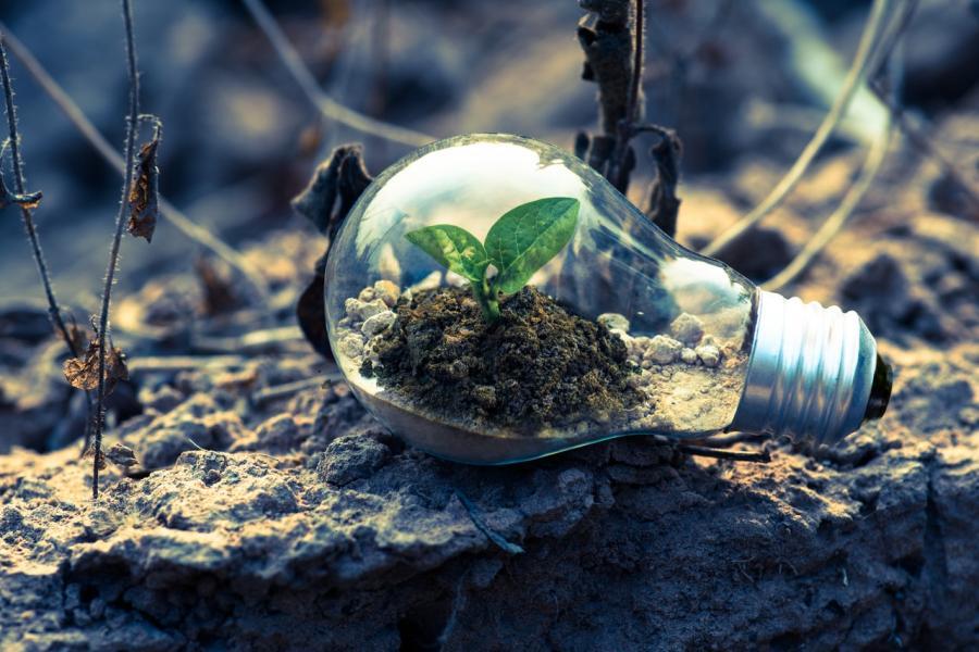 Biodiversidade do solo é essencial para a vida