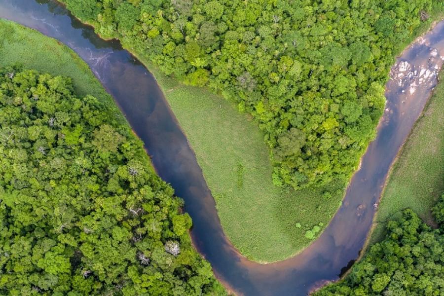 Selva no Panamá